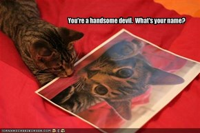 You're a handsome devil.  What's your name?