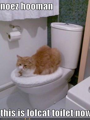 noez hooman  this is lolcat toilet nowz