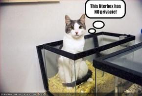 This literbox has NO privacie!