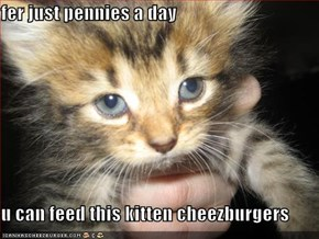 fer just pennies a day  u can feed this kitten cheezburgers