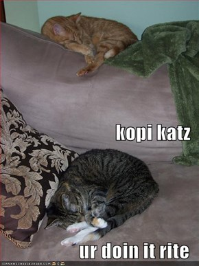 kopi katz ur doin it rite
