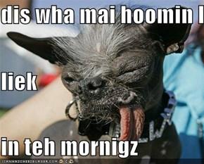 dis wha mai hoomin looks  liek  in teh mornigz