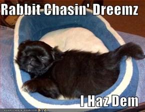 Rabbit Chasin' Dreemz  I Haz Dem