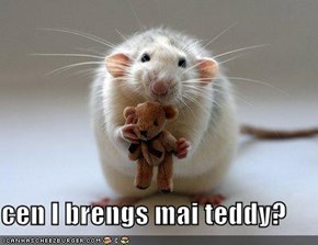 cen I brengs mai teddy?