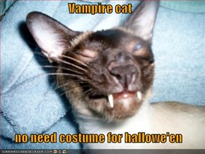 Vampire cat  no need costume for hallowe'en