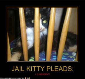 JAIL KITTY PLEADS: