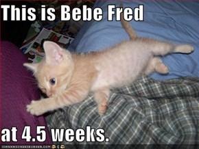 This is Bebe Fred  at 4.5 weeks.