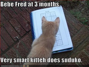 Bebe Fred at 3 months.  Very smart kitteh does suduko.