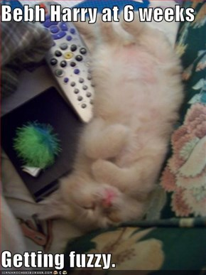 Bebh Harry at 6 weeks  Getting fuzzy.