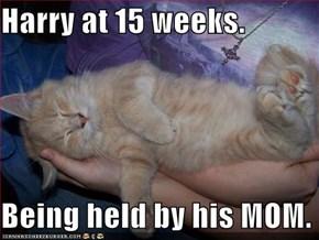 Harry at 15 weeks.  Being held by his MOM.