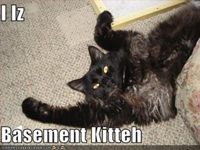 I Iz  Basement Kitteh