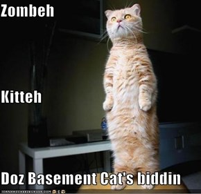 Zombeh Kitteh Doz Basement Cat's biddin