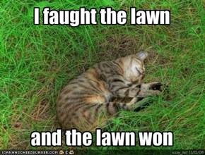I faught the lawn