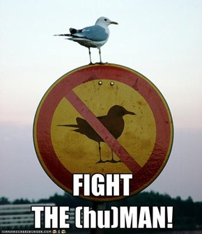 FIGHT