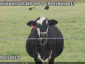 ur gonna make me a cheezburger?  how nice