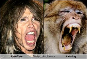 Steve Tyler Totally Looks Like A Monkey