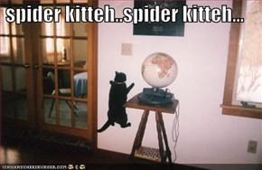 spider kitteh..spider kitteh...