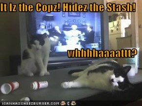 It Iz the Copz! Hidez the Stash! whhhhaaaattt?