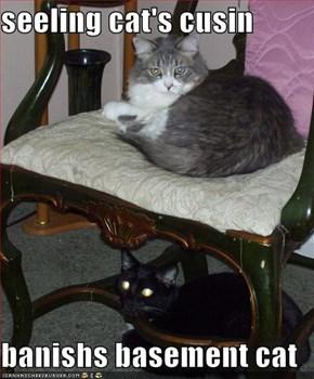 seeling cat's cusin  banishs basement cat