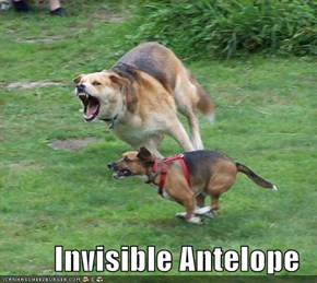 Invisible Antelope