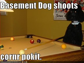Basement Dog shoots  cornr pokit.