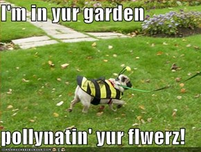 I'm in yur garden  pollynatin' yur flwerz!