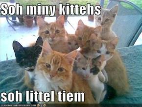 Soh miny kittehs  soh littel tiem