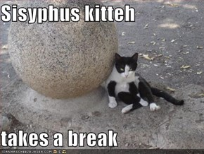 Sisyphus kitteh  takes a break