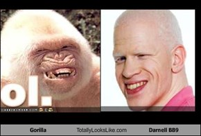Gorilla Totally Looks Like Darnell BB9