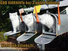 GUD MORNIN!u haz 3 unfed kittehs!   (feed teh kittehs?)