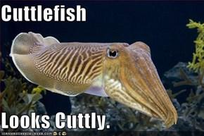 Cuttlefish  Looks Cuttly.