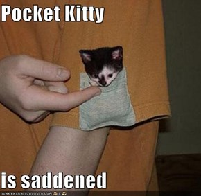 Pocket Kitty  is saddened
