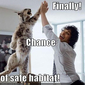Finally! Chance of safe habitat!