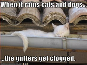 When it rains cats and dogs...  ...the gutters get clogged.