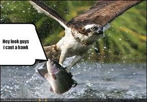 Hey look guysi caut a hawk