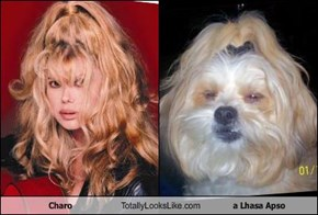 Charo Totally Looks Like a Lhasa Apso