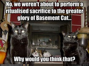 No, we weren't about to perform a ritualised sacrifice to the greater glory of Basement Cat...
