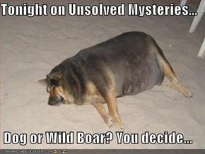 Tonight on Unsolved Mysteries...  Dog or Wild Boar? You decide...