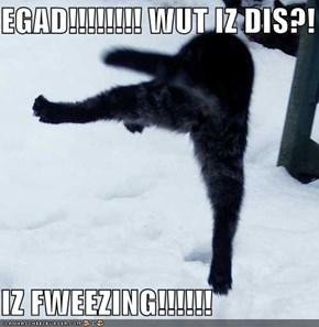 EGAD!!!!!!!! WUT IZ DIS?!   IZ FWEEZING!!!!!!