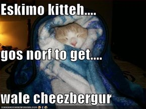 Eskimo kitteh.... gos norf to get.... wale cheezbergur