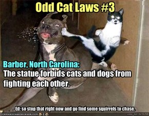 Odd Cat Laws #3