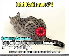 Odd Cat Laws #4