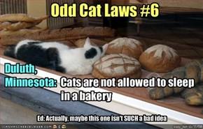 Odd Cat Laws #6