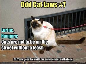 Odd Cat Laws #7