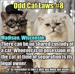 Odd Cat Laws #8
