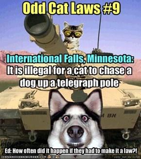Odd Cat Laws #9