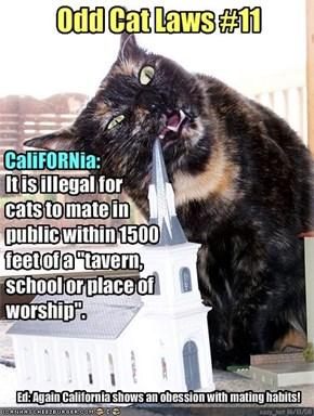 Odd Cat Laws #11