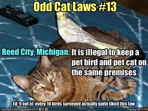 Odd Cat Laws #13