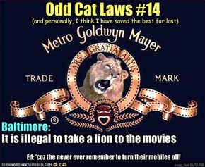 Odd Cat Laws #14