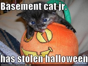 Basement cat jr.  has stolen halloween